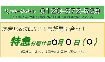 干支.comお急ぎ便